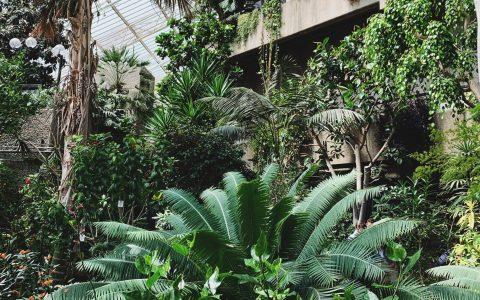 Dzsungel a házhoz